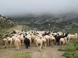 μετακινούμενοι κτηνοτρόφοι