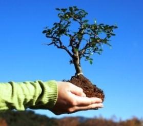 προστασία δασών